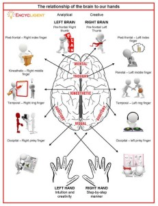 Encycligent - relationship of brain to hand