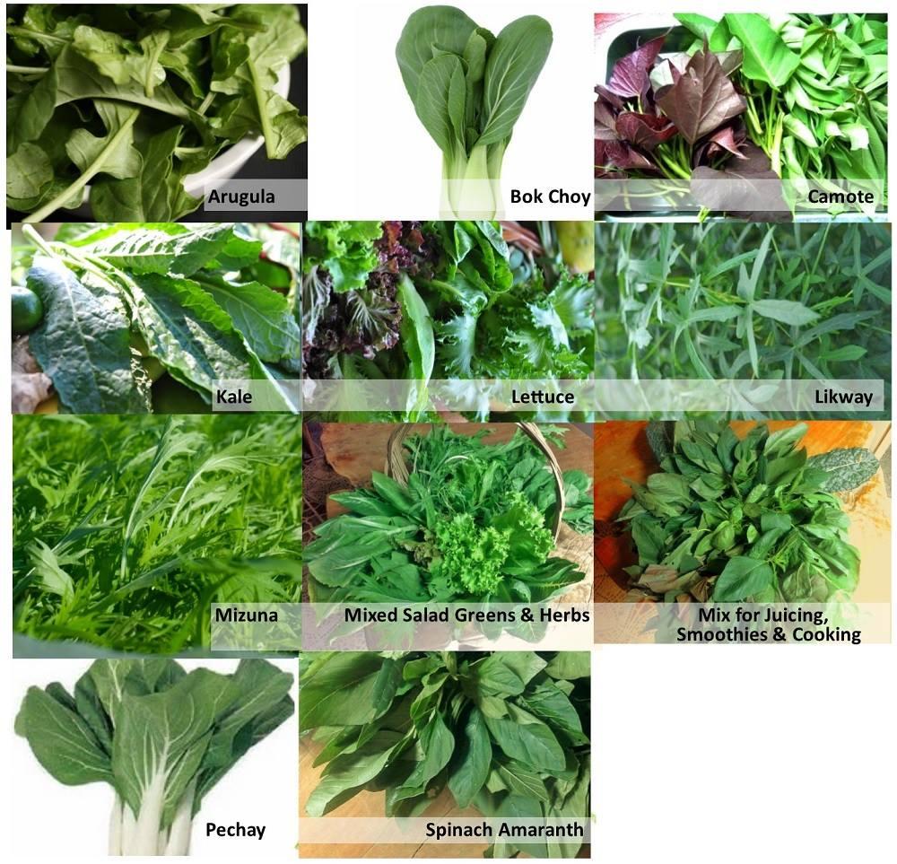 healing present vegetables