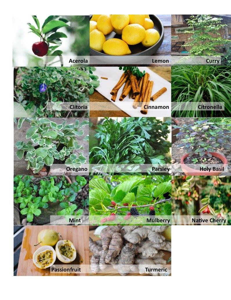 healing present herbs