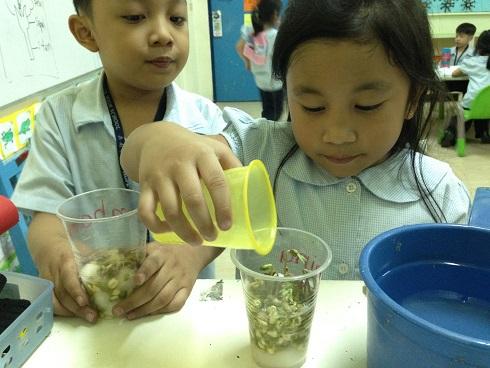 Planting Monggo Seed