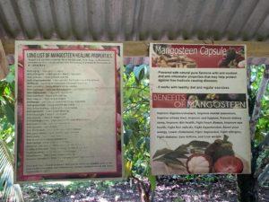 GerNil Farm Exploring Organic Farms Tour mangosteen benefits
