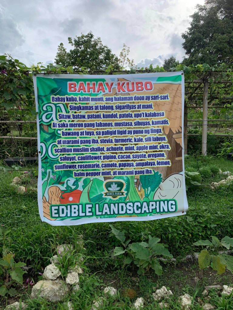 Sebul Farm Exploring Organic Agriculture ATI 10th Bloggers Event bahay kubo