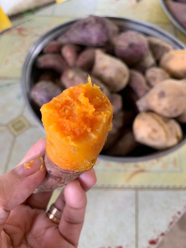 Sebul Farm Exploring Organic Agriculture ATI 10th Bloggers Event marawi sweet potato
