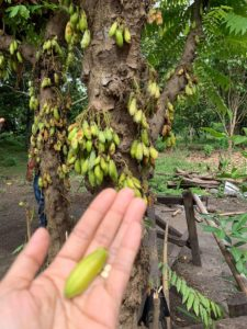 Felicidad Orchard & Garden Organics